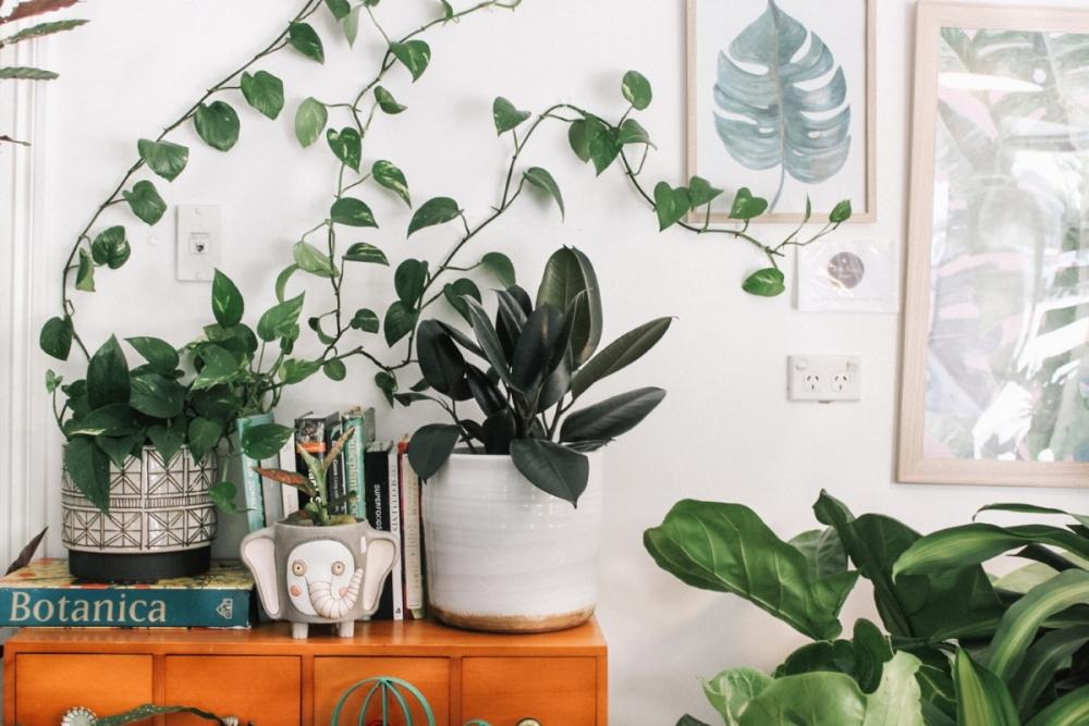Ideas para Cuidar tus Plantas Interiores durante el Otoño