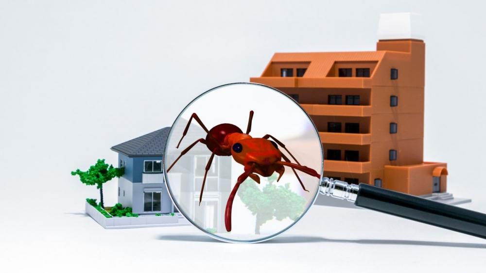 Protege tu Hogar de los Insectos